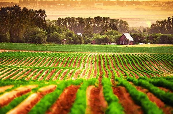 Predictive-agriculture