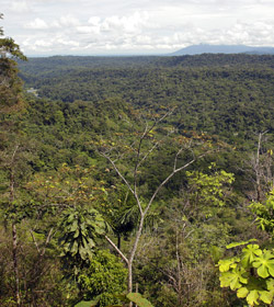 Amazonforest