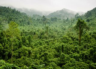 Rainforest_chambers
