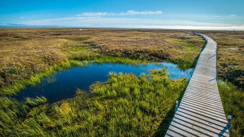 NGEE-Arctic-Boardwalk-2013